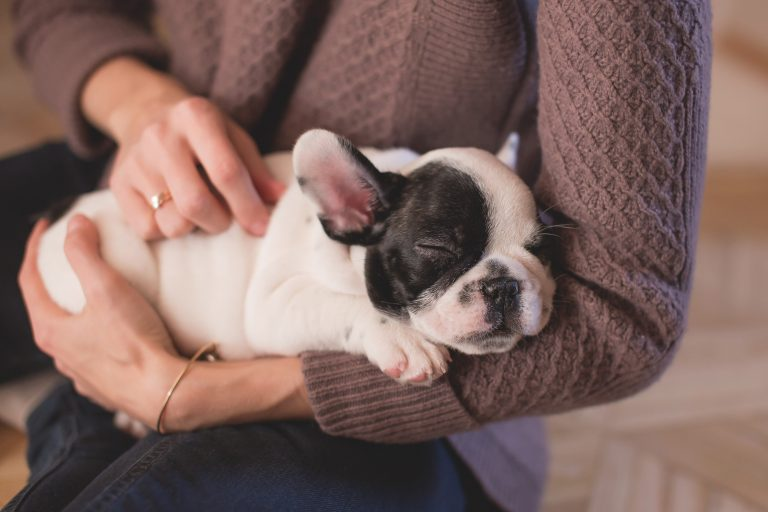Consumer Trends: Pet Products and How to Effectively Advertise to Pet Owners